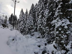 Azra Dağ Evi̇, Alpesi faházak  Güzelce - big - 27