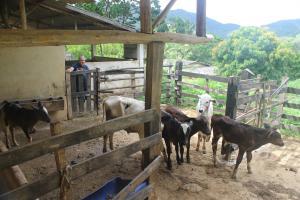 Fazenda Serra Verde Carangola, Guest houses  São Manuel de Carangola - big - 26
