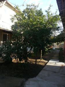 Guest house Yuzhnaya Palmira, Vendégházak  Picunda - big - 21