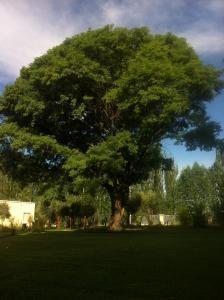 Ayres de Cuyo, Apartmány  San Rafael - big - 36