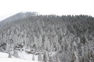 Azra Dağ Evi̇, Alpesi faházak  Güzelce - big - 36