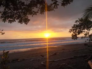 Matapalo Surf School and Beach Cabin