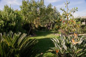 Il Vecchioliveto di Ornella, Bed & Breakfasts  Marrùbiu - big - 62