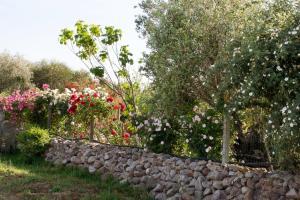 Il Vecchioliveto di Ornella, Bed & Breakfasts  Marrùbiu - big - 46