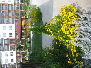 Apartcomplex Chateau Aheloy, Apartmánové hotely  Aheloy - big - 101
