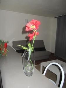 Appartement Standing Gosier, Apartmány  Mare Gaillard - big - 5