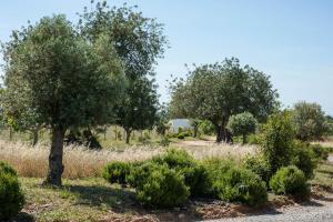 Pensão Agricola (3 of 87)