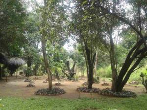 Guruge Villa Habarana, Penziony – hostince  Sigiriya - big - 14