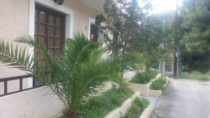 Philoxenia By Kyriakakou, Residence  Agia Marina Aegina - big - 42