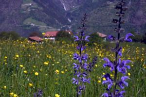 Niederhof, Agriturismi  Parcines - big - 17