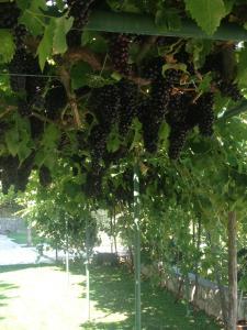 Wine House Apartment Sekulic, Apartmány  Podgorica - big - 6