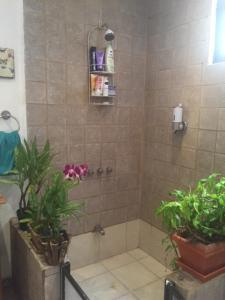 Nirvana Apartments, Aparthotels  Alajuela - big - 4