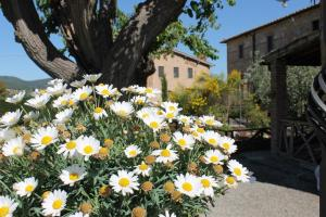 Casa Di Campagna In Toscana, Vidiecke domy  Sovicille - big - 105