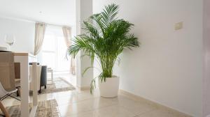 Ahro Suites, Апартаменты  Малага - big - 29