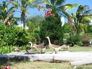 Residence Foulsafat, Chaty  Port Mathurin - big - 83