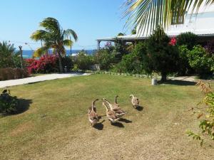 Residence Foulsafat, Chaty  Port Mathurin - big - 85