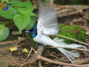 Weaver Bird Villa, Гостевые дома  Хабарана - big - 33