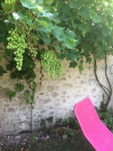 Le Figuier, Bed & Breakfast  Sainte-Maure-de-Touraine - big - 35
