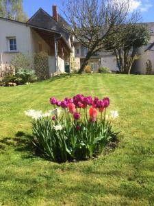 Le Figuier, Bed & Breakfasts  Sainte-Maure-de-Touraine - big - 34