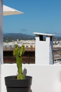 Apartamentos Xereca - Dalt Vila IV, Case vacanze  Ibiza città - big - 4