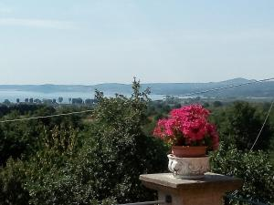 Casa Vacanze Paradiso, Prázdninové domy  San Lorenzo Nuovo - big - 28