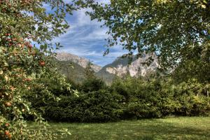 Alexander Mountain-Lodge, Holiday homes  San Vigilio Di Marebbe - big - 18
