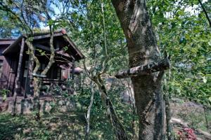 Three Hills Coorg, Villas  Madikeri - big - 6