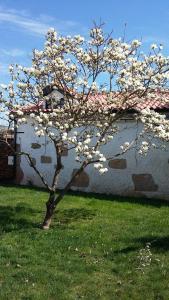 Casa da Quinta De S. Martinho, Guest houses  Vila Real - big - 82