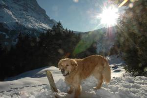 Alpenhof, Szállodák  Grindelwald - big - 57