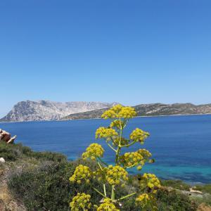 Casa Mare Sardegna Cavallo - AbcAlberghi.com