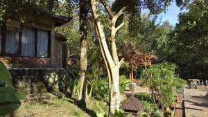 Mi Casa Ijen Guest House, Penzióny  Licin - big - 20