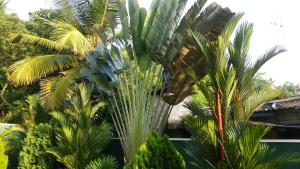 Coral Palm Villa and Apartment, Apartmány  Unawatuna - big - 24