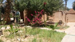 Camping Auberge Aain Nakhla, Ostelli  Guelmim - big - 47
