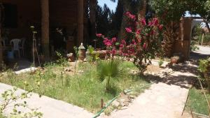 Camping Auberge Aain Nakhla, Ostelli  Guelmim - big - 37