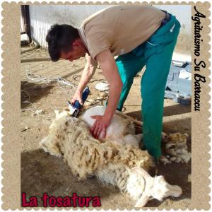 Agriturismo Su Barraccu, Farm stays  Loceri - big - 34