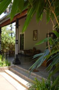 The Ficus Grove
