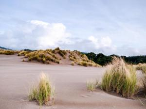 Mendocino Dunes - Dune Flower, Dovolenkové domy  Fort Bragg - big - 6