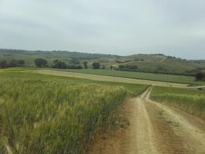 Agriturismo da Remo, Bauernhöfe  Magliano in Toscana - big - 27