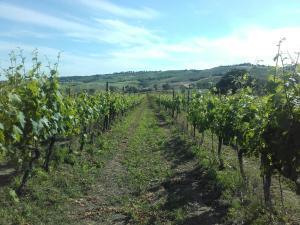 Agriturismo da Remo, Bauernhöfe  Magliano in Toscana - big - 31