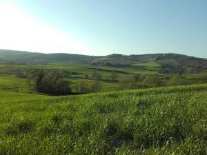 Agriturismo da Remo, Bauernhöfe  Magliano in Toscana - big - 9