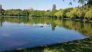 Apartment Jardin, Апартаменты  Бухарест - big - 20