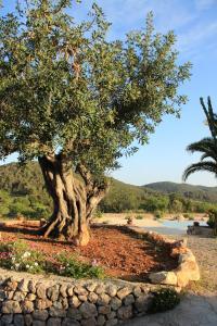 Casa Vilda, Vily  Sant Mateu d'Albarca - big - 15