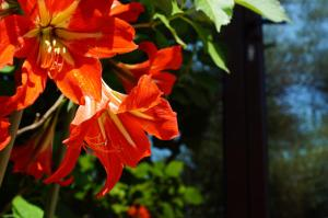 Villa Lily of Budva, Villas  Budva - big - 50