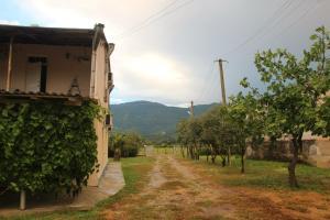 U Rafa Guest House, Guest houses  Pizunda - big - 60