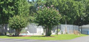Glens Bay Retreat 1356- 203D, Vily  Myrtle Beach - big - 6