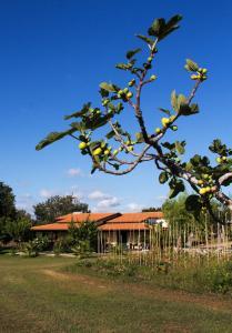 Agriturismo Ninea, Country houses  Ricadi - big - 33