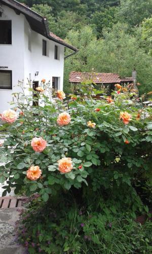 Guest House Planinska Sreshta