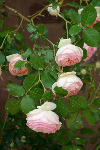 Bastide Rose - 25 of 59
