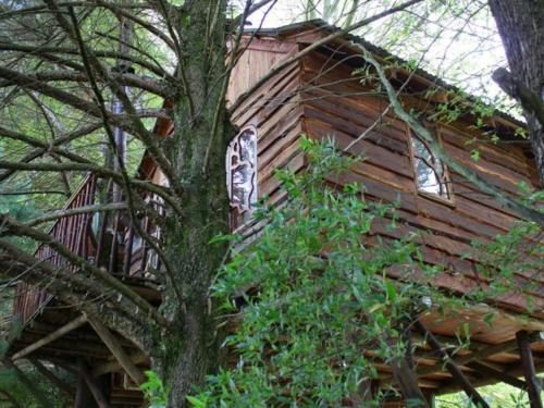 Sycamore Avenue Treehouse Accommodation Photo