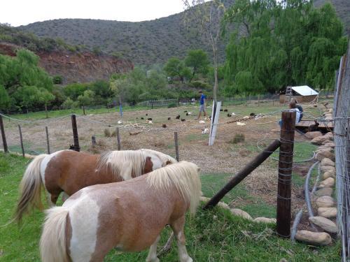 De Oude Meul Game Farm Photo